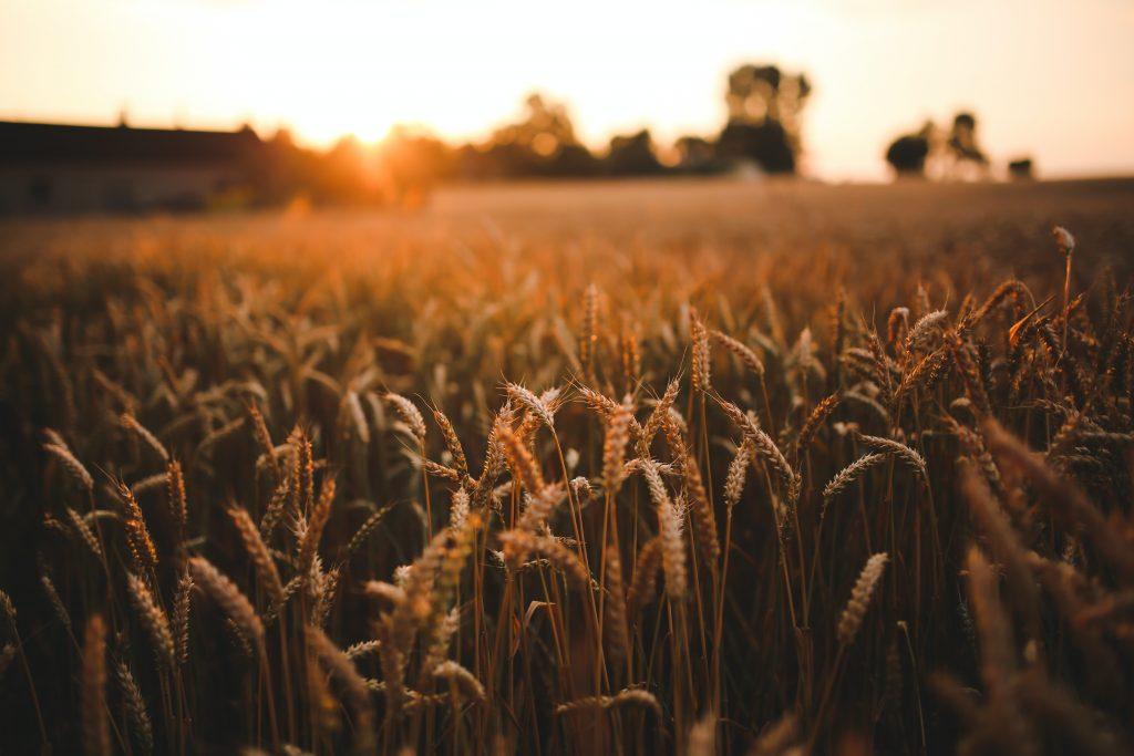 Kalendarz rolniczy