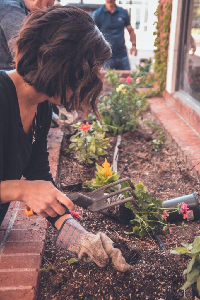 sadzenie w ogrodzie