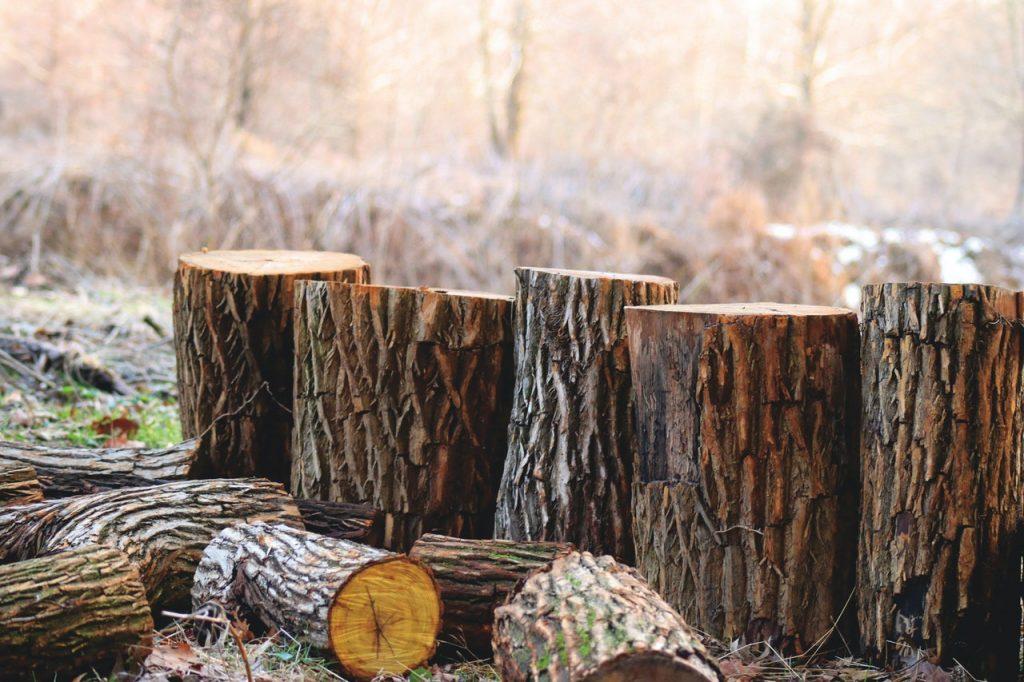 wycinka drzew