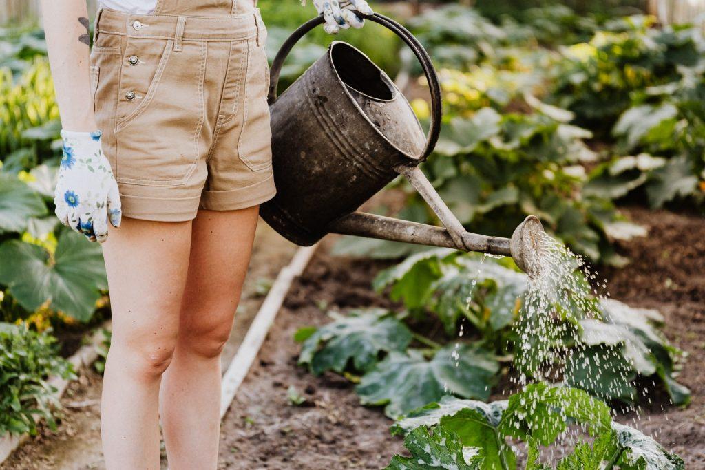 ogród narzędzia